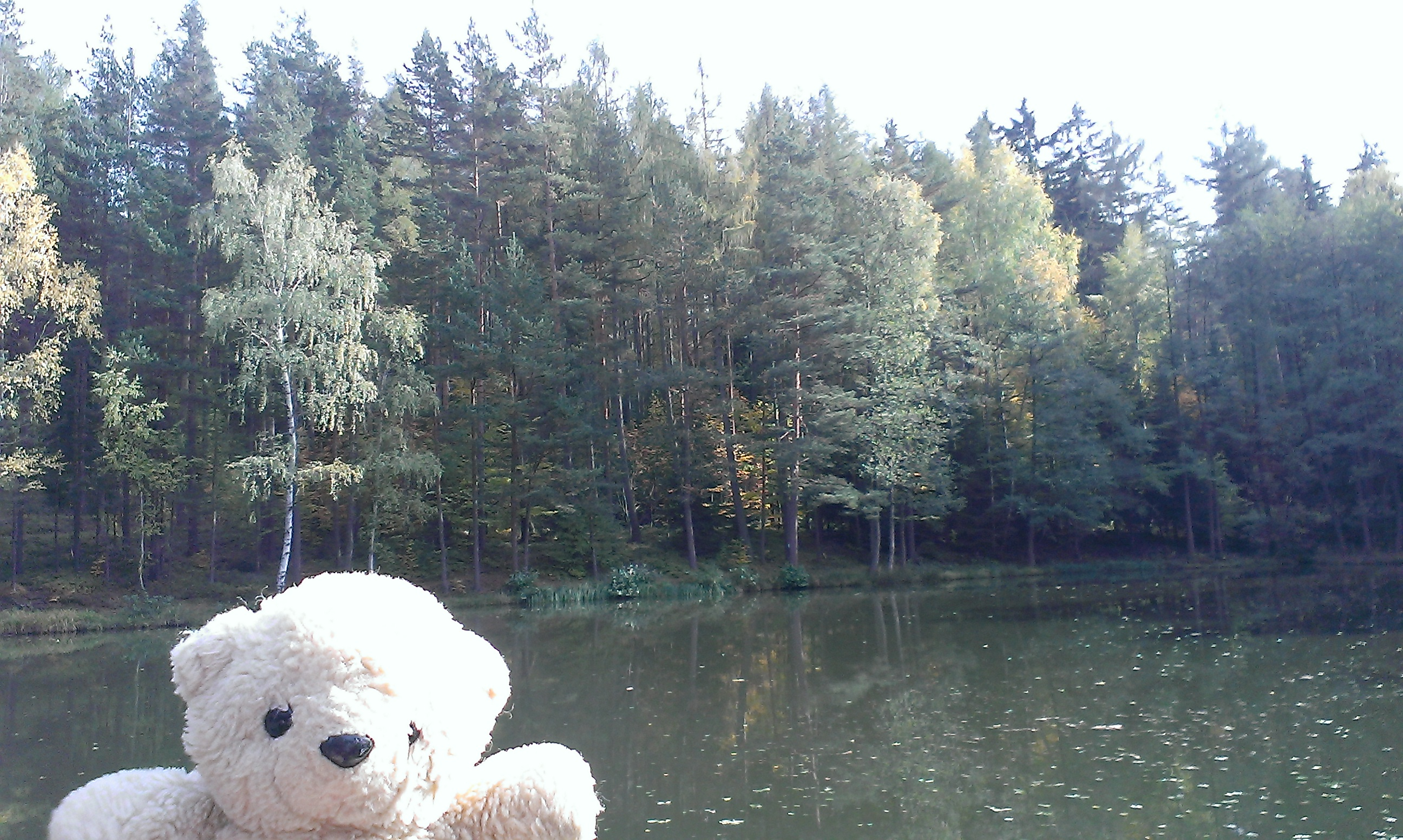 Teddy in Thüringen