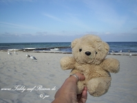 Teddy am Strand