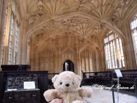 Teddy in Oxford